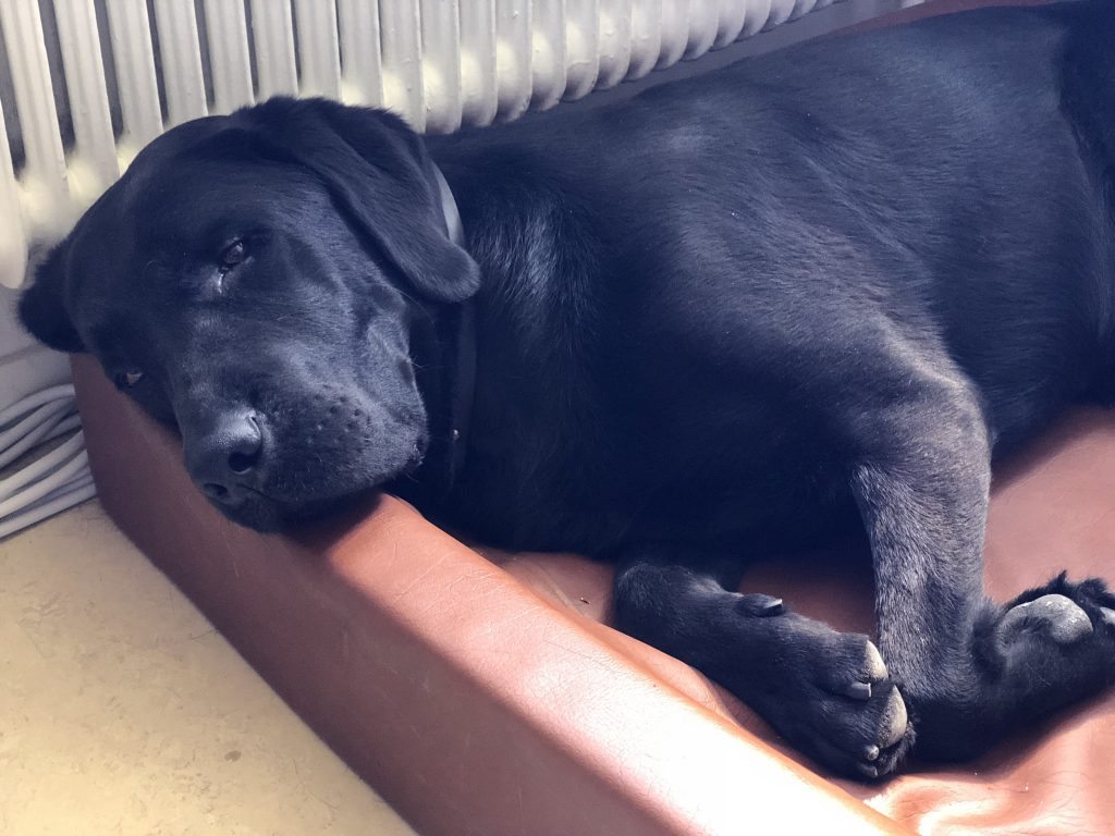 Zico i sin korg, sovandes djupt.