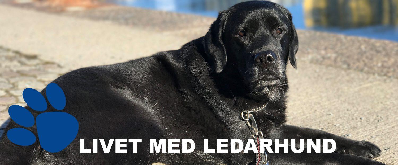 Livet med ledarhund