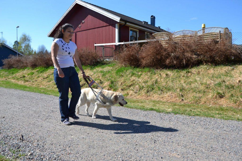 En kvinna går med en gul ledarhund i sele på en grusväg. Det är sommar och man ser ett rött hus och blå himmel i bakgrunden.